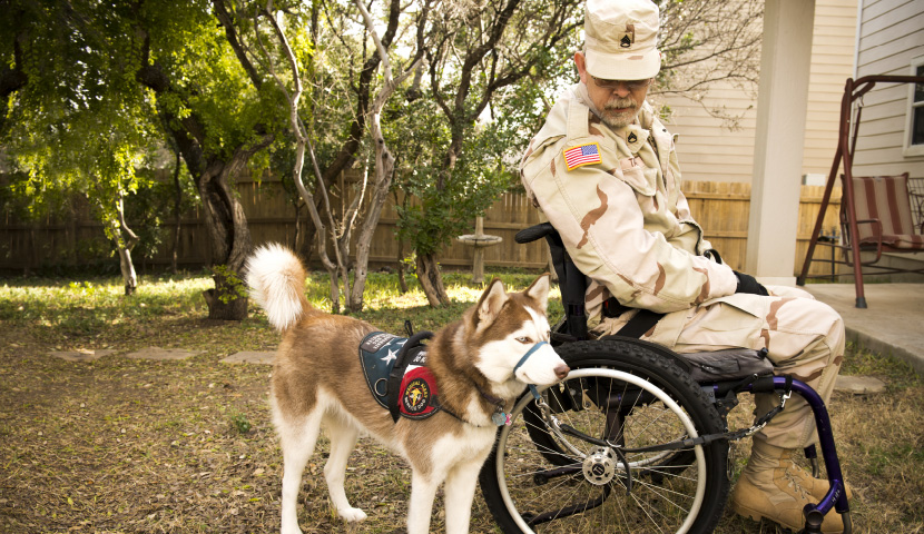 Service Dog Training University
