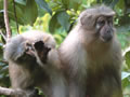 Using Science to Save Endangered Primates in Tanzania