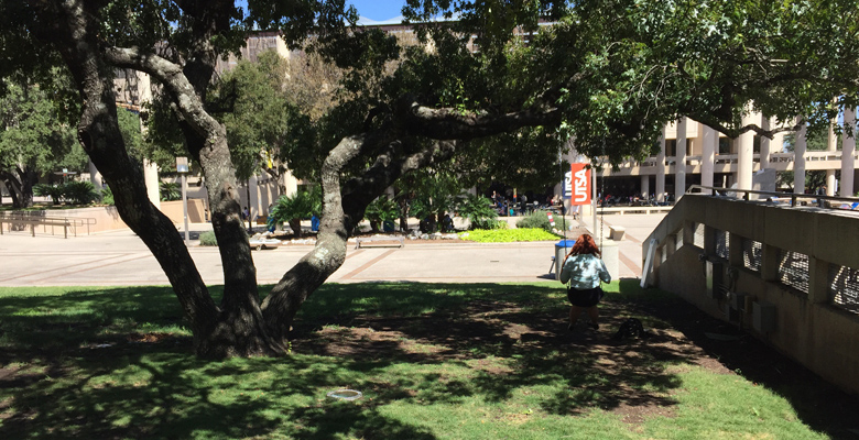 UTSA photo of the day: A bit of shade